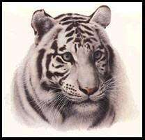 Charles Frace, WHITE TIGER HEAD Print