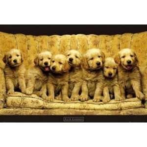 Shades of Gold Kimberlin Cute Puppy Dog Animal Poster 24 x