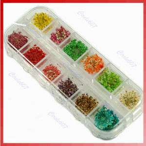 60 Real Dry Dried Flower Nail art Tips Decoration DIY