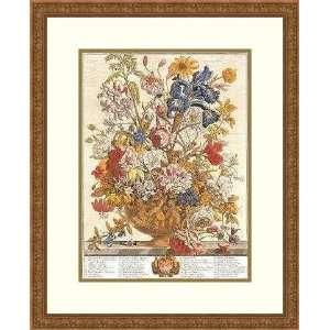 Twelve Months of Flowers, 1730/June by Robert Furber