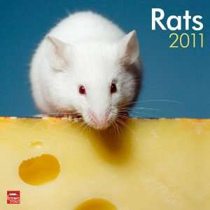 2011 Animal Calendars: Rats   12 Month   30x30cm:  Kitchen