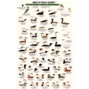 Macs Field Guide to Northwest Coastal Water Birds (Macs